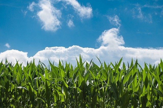 The revolution of the agricultural sector: agriculture 4.0